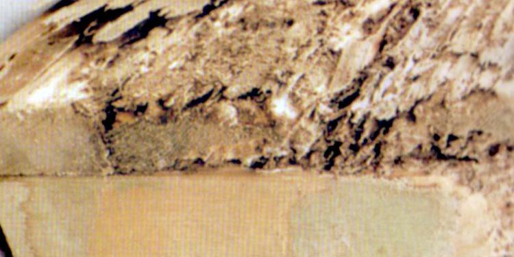 ヤマトシロアリ による木材の被害