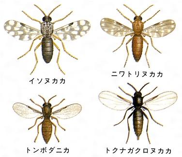 出典 小学館 日本大百科全書(ニッポニカ)について